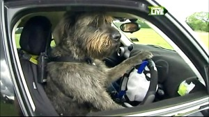 As you can see, New Zeelanders drive on the right.  Good thing this fellow is left-handed.