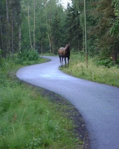 I ran into this little lady on Ship's Creek Trail and she refused to let me by.  Something about calling her a fat cow.