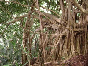 I try and try to take this Banyan out for a nice meal, but it keeps just ordering soup.